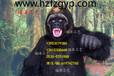 張嘴黑猩猩,金剛Q-101103
