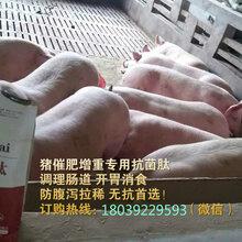 猪催肥最简单方法猪催肥剂日长三斤