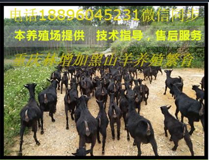 重庆市丰都县双龙林增加黑山羊养殖场