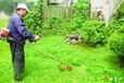 临平绿植租赁公司植物出租照片及大优势