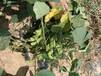 东莞绿野生态专业销售绿化草种,抗旱草种,耐热草种灌木种子
