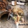 上海宝山区清理污水池公司——《宝山区清理隔油池'有限'公司》
