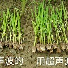 權威的作物種子增產處理調優技術哪里有科技興農圖片