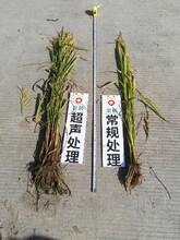 广东有实力的作物种子增产处理调优技术公司_提高种子发芽率方法图片