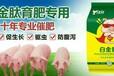 猪吃什么一招催肥