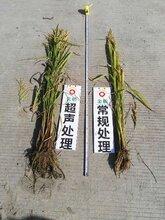 作物种子增产处理调优技术哪家好,小麦增产技术图片