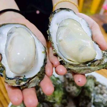 佛山优质的生蚝提供商-九江生蚝批发多少钱一斤