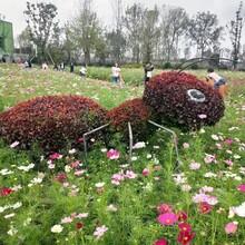 草地主题创意大蚂蚁绿雕大型动物大象造型创意主题绿雕图片