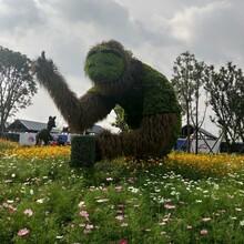 创意仿真绿雕造型定制成都大熊猫造型仿真绿雕定制图片