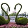 花卉造型,广场绿雕草花,绿雕花卉江瑞绿雕造型设计施工