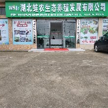 荆州黑斑蛙养殖的技术问题 湖北蛙农9号