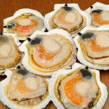 靠谱的扇贝供应商推荐-台州花蛤批发图片