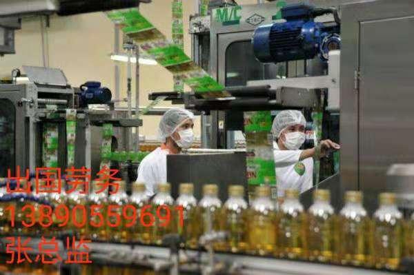 爱尔兰美国正规劳务派遣年薪36万保底巧克力厂奶粉厂