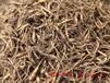 中國太子參-臨沂晶海藥用植物提供高性價太子參