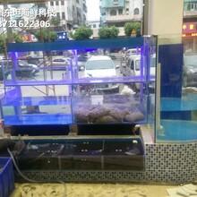 佛山海鮮池安裝 玻璃魚缸圖片