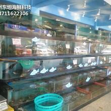 佛山海鮮池安裝 玻璃魚缸 定做東坦魚池圖片