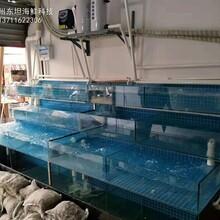 海鮮池定做 飯店海鮮魚池定做 可定制圖片