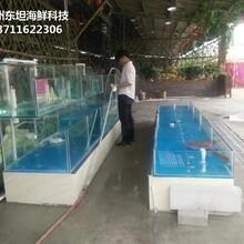 廣州定做超市魚池 海鮮市場玻璃魚池圖片