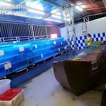 深圳龍崗海鮮池定制 玻璃魚缸 定做東坦魚池圖片