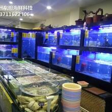 中山港口海鮮池廠家 玻璃魚缸 定做東坦魚池圖片