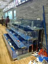廣州越秀哪里訂做可移動海鮮池 海鮮市場玻璃魚池圖片