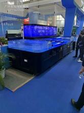 肇慶海鮮池定做哪家質量好 飯店海鮮魚池定做 廠家定做圖片