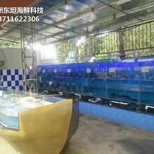 廣州海鮮魚池冷水機 玻璃魚缸 定做東坦魚池圖片