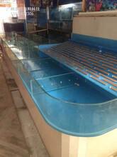 陽江海鮮池定做哪家質量好 飯店海鮮魚池定做 廠家定做圖片