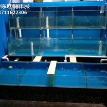 廣州哪里訂做超市魚池 海鮮市場玻璃魚池圖片