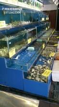 廣州南沙玻璃海鮮池定做電話 海鮮魚缸圖片
