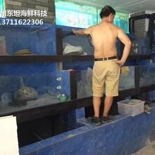 東莞東城海鮮魚缸大理石包邊 餐飲魚池圖片