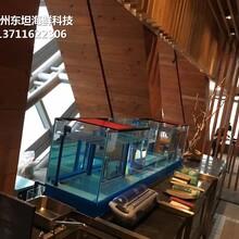 東莞大嶺山定做大排檔海鮮魚池 不銹鋼海鮮池圖片