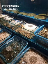 東莞海鮮魚缸定做電話 酒店海鮮池圖片