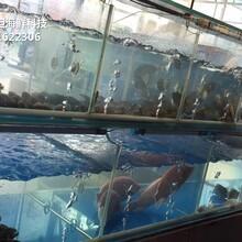 東莞厚街海鮮魚缸設計 飯店海鮮池 貝殼魚池蝦蟹魚池圖片