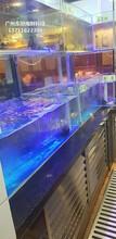 廣州海鮮池過濾系統 海鮮魚缸圖片