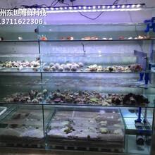 廣州海鮮池過濾系統 玻璃海鮮池 梯形魚池土建魚池圖片