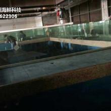 東莞長安海鮮魚缸設計 大排檔海鮮魚池圖片