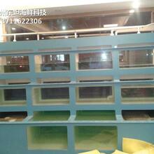 廣州荔灣玻璃海鮮池多少錢 海鮮魚缸 梯形魚池土建魚池圖片