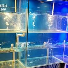 廣州天河海鮮魚池冷水機 玻璃海鮮池 梯形魚池土建魚池圖片