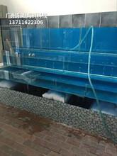 東莞謝崗海鮮魚缸清洗消毒 不銹鋼海鮮池圖片