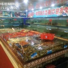 廣州天河哪里訂做可移動海鮮池 大排檔海鮮魚池圖片