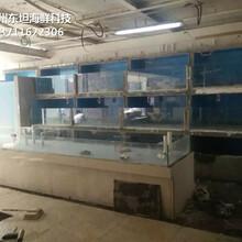 廣州番禺玻璃海鮮池尺寸 海鮮池圖片