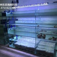 廣州荔灣海鮮池設備 海鮮魚缸圖片