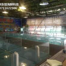 中山神灣海鮮池定制 海鮮魚池 定做東坦魚池圖片