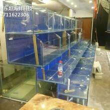 廣州越秀海鮮魚池定制 玻璃海鮮池圖片