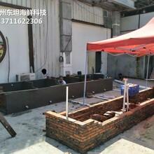 廣州番禺海鮮池多少錢 玻璃海鮮池圖片