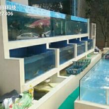 從化江埔海鮮魚缸價格 漁民新村海鮮魚池圖片
