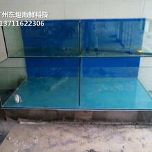 東莞沙田海鮮魚缸定做電話 飯店海鮮池圖片