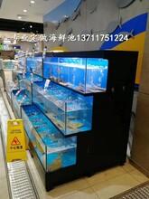 廣州沙東玻璃海鮮池價格 火鍋店海鮮池圖片