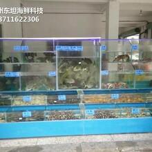 從化鰲頭海鮮池廠家 漁民新村海鮮魚池 定做東坦魚池圖片